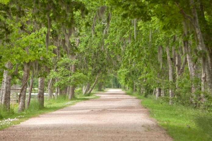 tree lined trail with spanich moss, brazos bend state park, texas