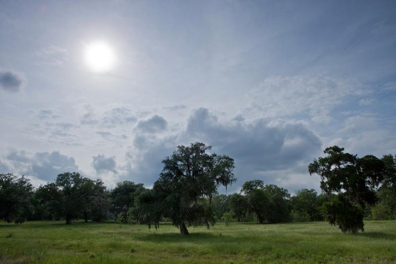 live oak landscape, brazos bend state park, texas
