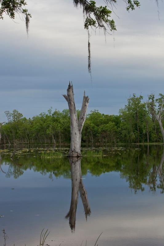 elm lake, brazos bend state park, texas