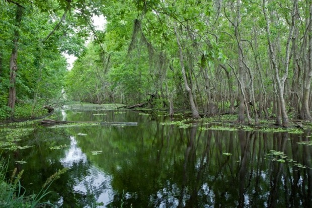 pilant lake, swamp, brazos bend state park, texas