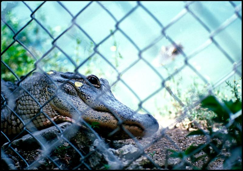 Everglades2