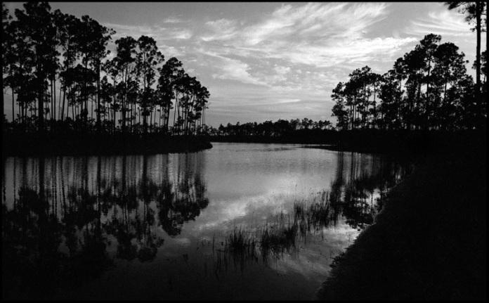 Everglades7