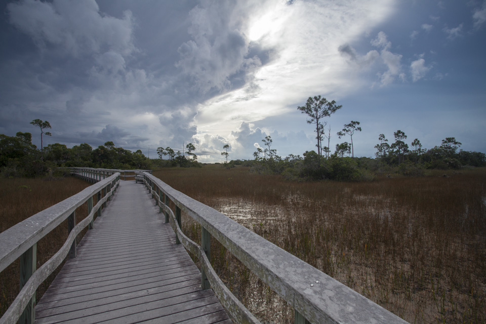 Mahogany Hammock trail boardwalk