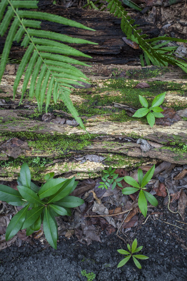 vegetation variety on the gumbo limbo trail