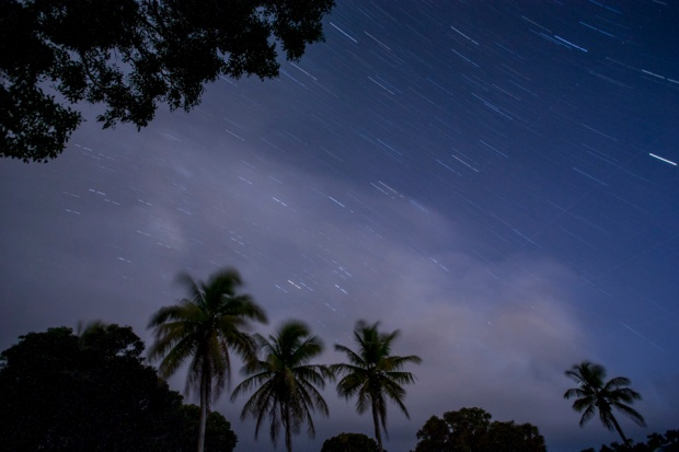 night sky and stars with palm at flamingo bay campground