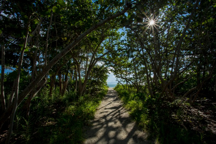 tree lined path to the beach