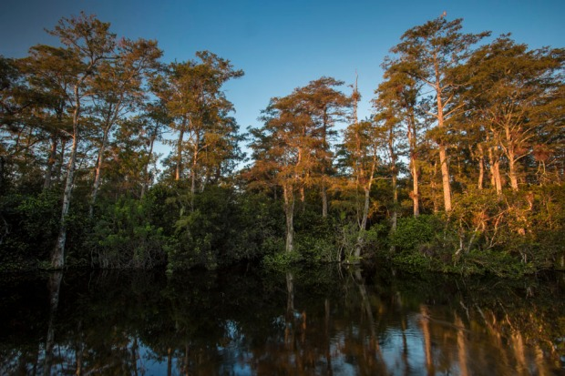 cypress forest swamp landscape