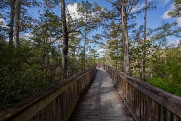 boardwalk trail in big cypress national preserve