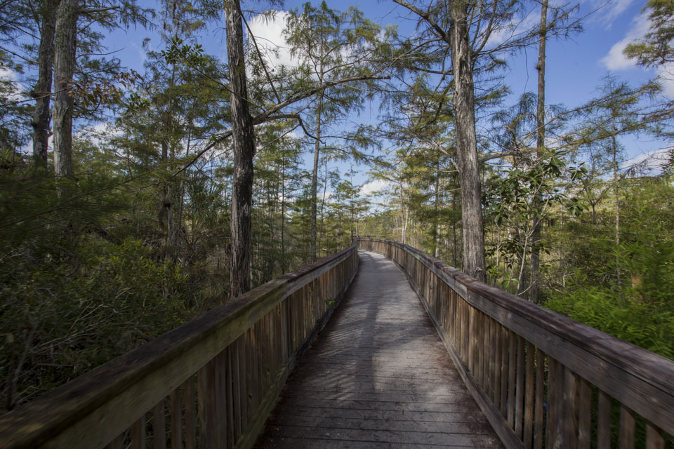 boardwalk trail in big cypress national preserve