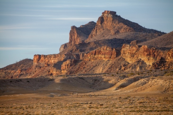A lone coyote wanders the desert in Big Bend National Park, Texas