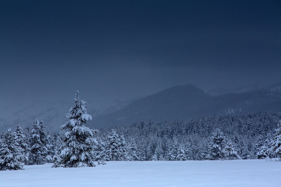 a hauntingly still winter day in snowy Grand Teton NAtional Park, WY