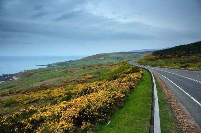 Wildflowers in spring bloom along the east coast of Scotland