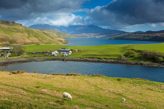 Sheep at pature, gesto bay, and Loch Harport, with Cuillin Hills, Isle of Skye
