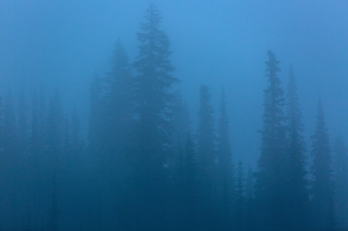 early morning fog and trees