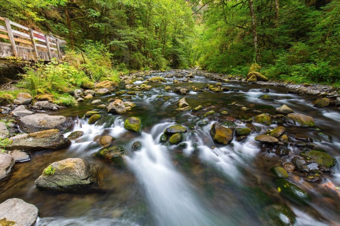 The trail to Wahclella Falls follow the beautiful and serene Tanner Creek
