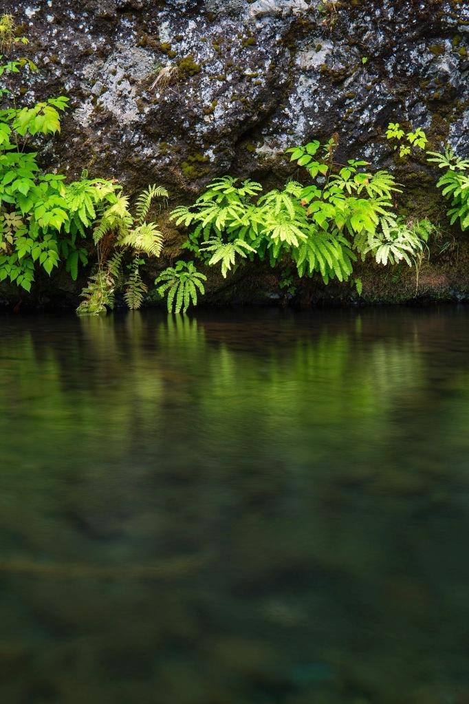 Ferns and vegetation detail near Wahclella Falls in Tanner Creek