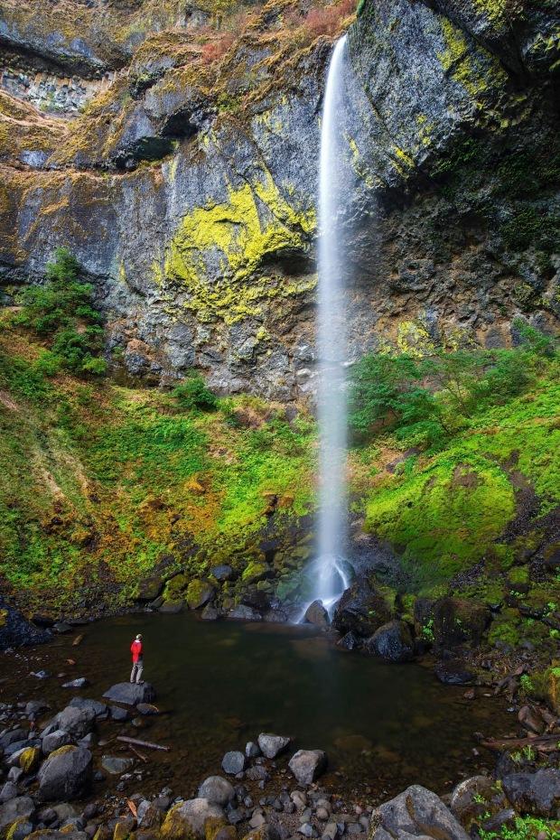 A man is drawrfed by Elowah Falls