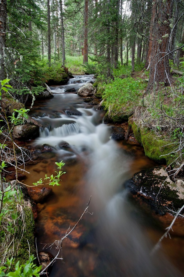 creek in forest, Rocky Mountain National Park, CO